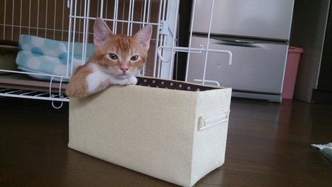 箱03_猫ねこch