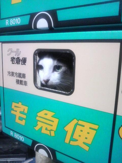 箱01_猫ねこch