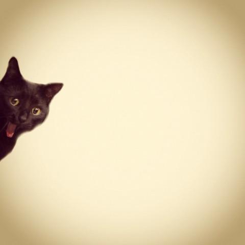 猫やくざ04_猫ねこch