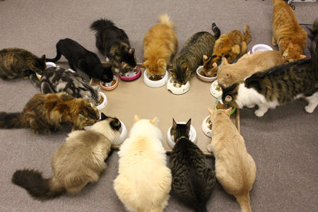 ご飯_猫ねこch