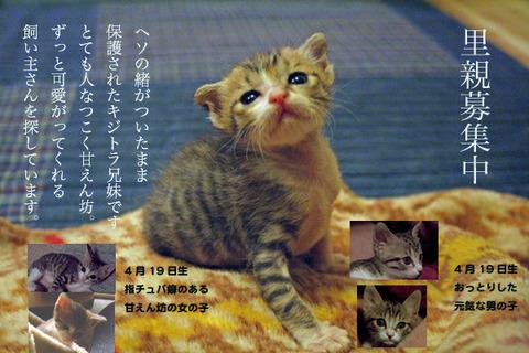 里親会_大阪_猫ねこch
