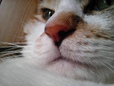 鼻01_猫ねこch