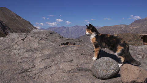 ネコ歩き01_猫ねこch