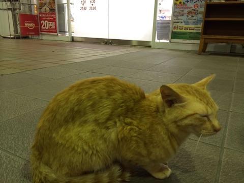 駅07_猫ねこch