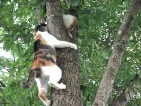 木登り_猫ねこch