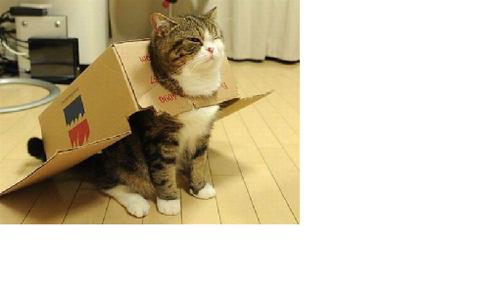 箱09_猫ねこch