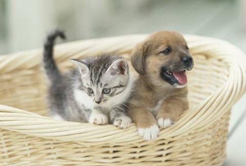猫好き_犬好き_猫ねこch