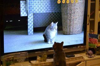 ネコ歩き_猫ねこch