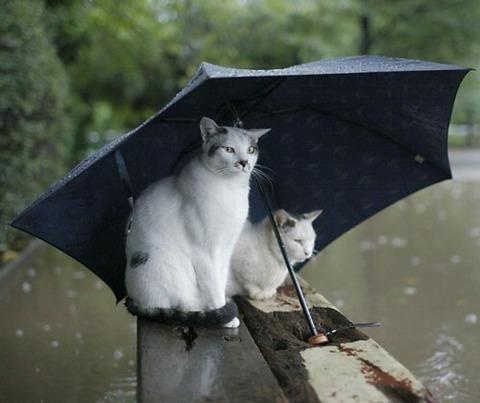 雨_猫ねこch