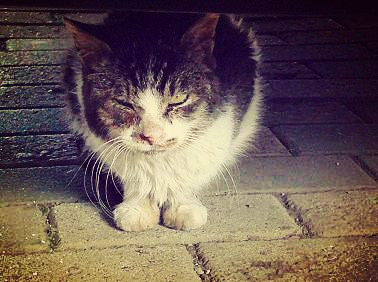 野良猫01_猫ねこch
