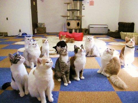 猫カフェ_ぼっち_猫ねこch