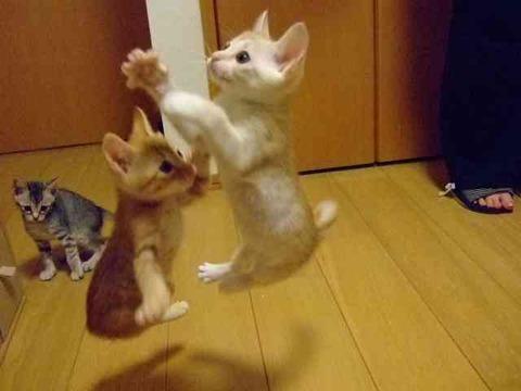子猫01_猫ねこch