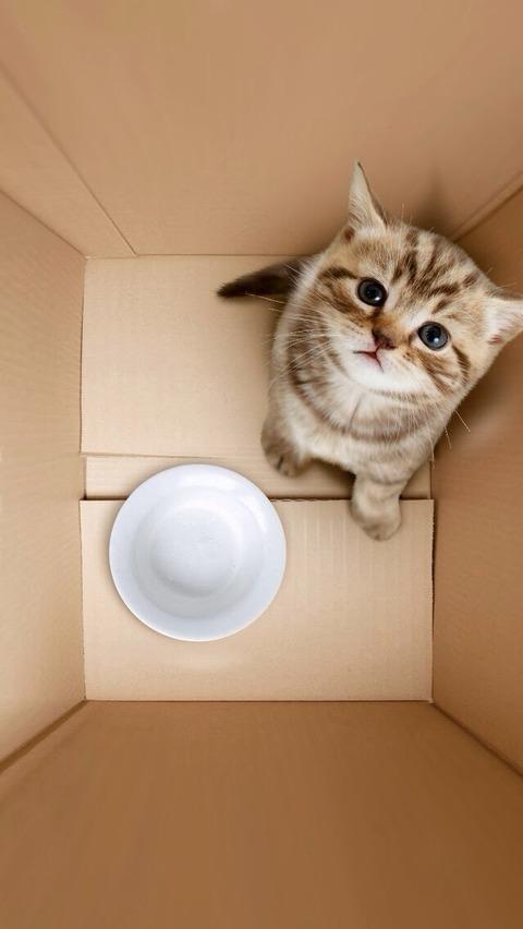 箱06_猫ねこch