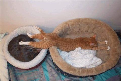 寝方08_猫ねこch