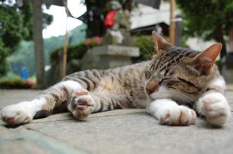 猫_糖尿病_猫ねこch