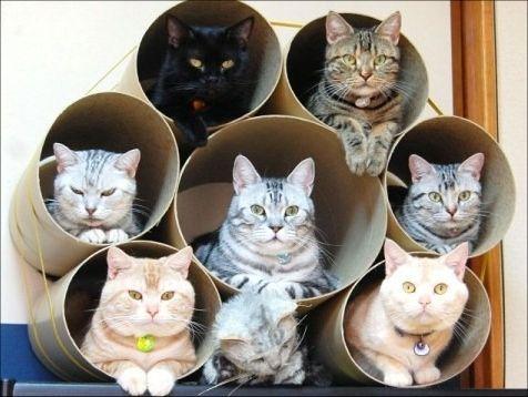 猫付きマンション_猫ねこch