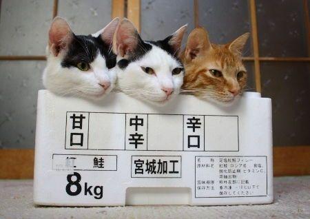 箱12_猫ねこch