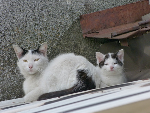親子05_猫ねこch