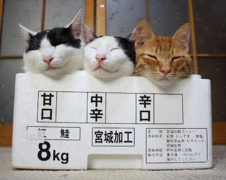 箱02_猫ねこch