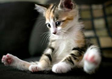子猫_猫ねこch