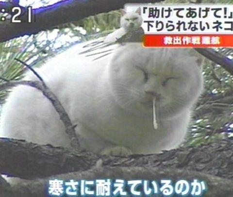 意外04_猫ねこch