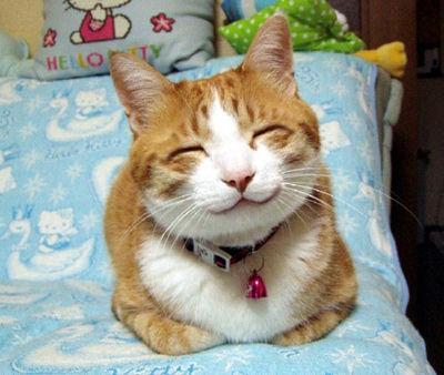 笑顔4_猫ねこch