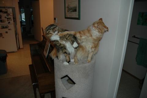 降りろよ_猫ねこch