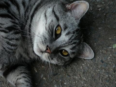 ぬこ27_猫ねこch