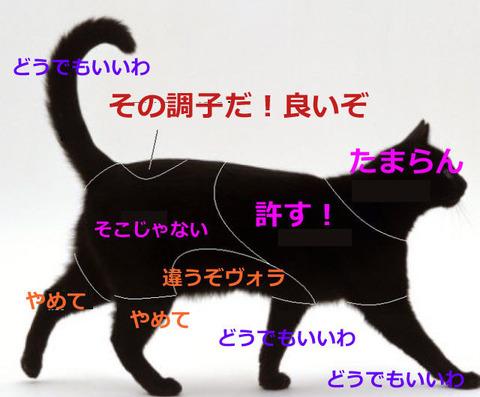尻尾_リアクション1_猫ねこch