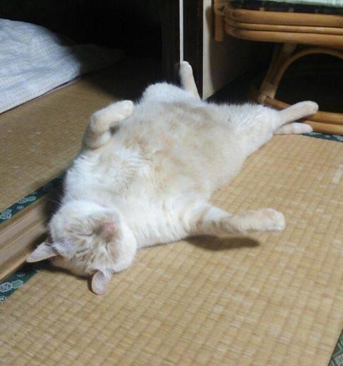 おネコ様05_猫ねこch