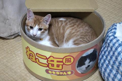 ねこ缶2_猫ねこch
