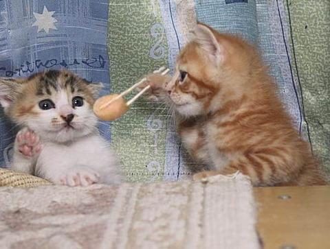 面白_猫ねこch