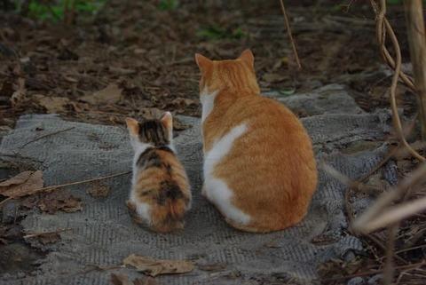 辛い_猫ねこch