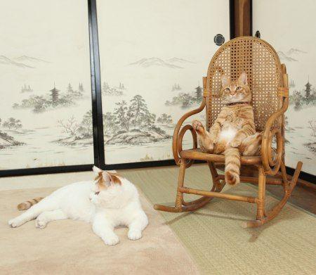座る猫_猫ねこch