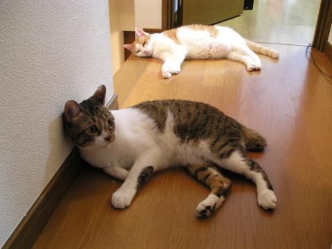猫_二匹_猫ねこch