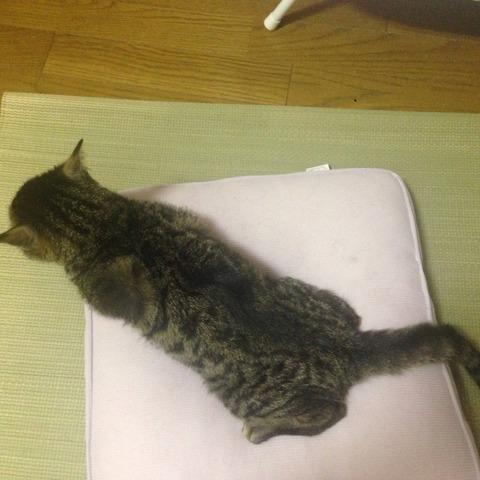 猫が動かない2_猫ねこch