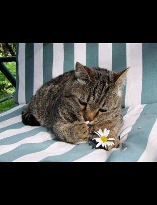 切ない01_猫ねこch
