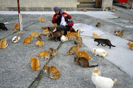 包囲_猫ねこch