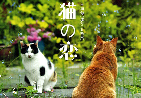 猫の恋_猫ねこch