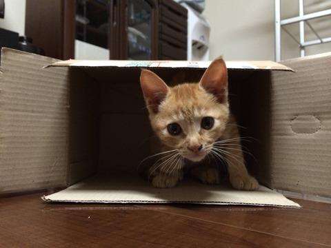 猫テロ12_猫ねこch