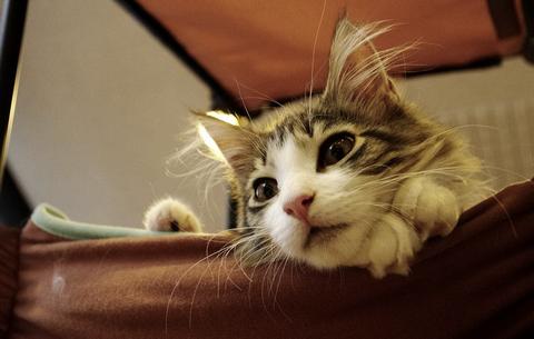 猫を飼う_猫ねこch