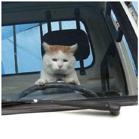 ぬこ28_猫ねこch
