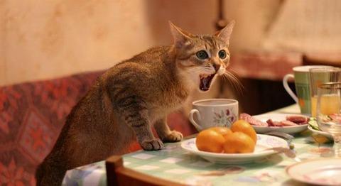 猫やくざ06_猫ねこch