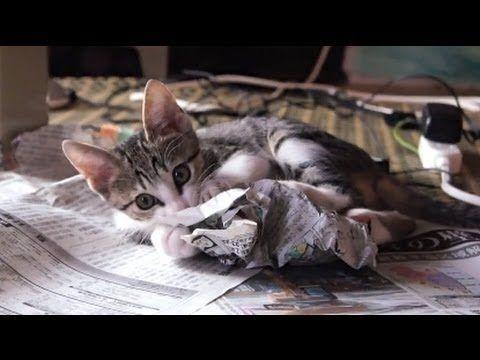 新聞_猫ねこch