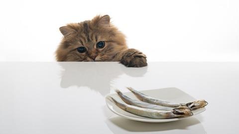 猫_ご飯_猫ねこch