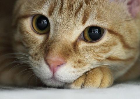 不思議な縁_猫ねこch
