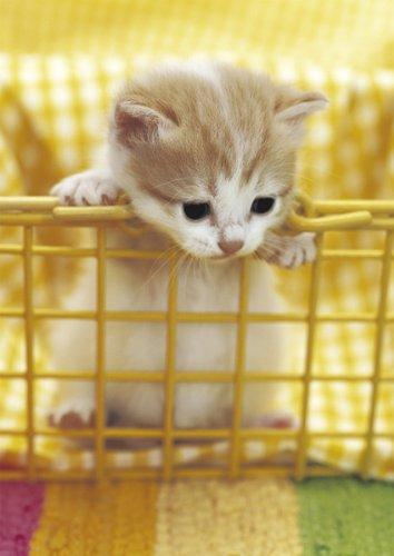 箱26_猫ねこch