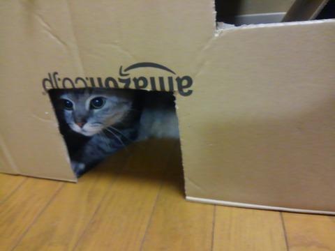 猫自慢11_猫ねこch