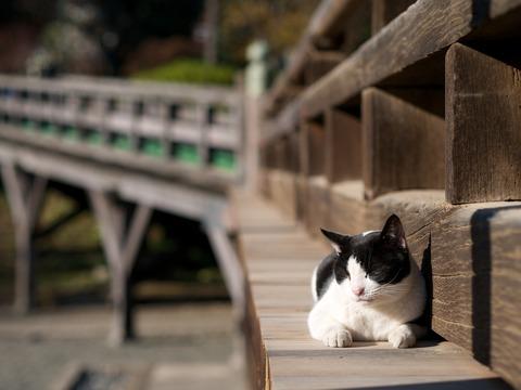 神社01_猫ねこch