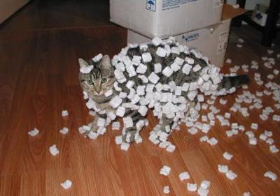 boketetop_猫ねこch